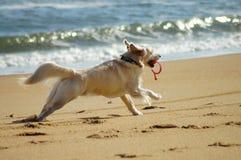 Dog Days of Summer stock photo