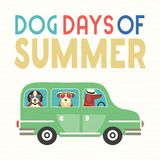 Dog days of summer. Time for adventure. Cute comic cartoon. Colorful humor retro style. Dogs go by bus to beach for fun leisure relax. Dog days of Summer time stock illustration