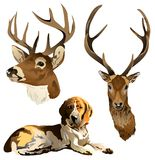 A dog and a deer head. Stock Photography