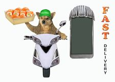 Dog delivering sushi on a moped royalty free stock photography