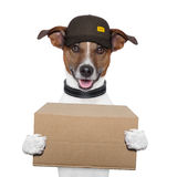 Dog delivery post Royalty Free Stock Image