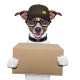 Dog delivery post Royalty Free Stock Photography