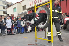 Dog demonstration. Rescue dog demonstration of firefighters royalty free stock photography