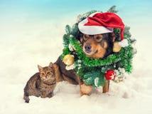 Dog den bärande julkransen och santa hatten med den lilla kattungen Royaltyfria Bilder