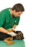 Dog at dentist Stock Photo
