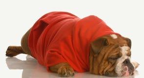 Dog depression Royalty Free Stock Photos