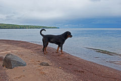 A dog on a deserted beach Stock Photography