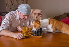 Dog desperately trying to help master with chess game moving the right chess-men to right direction Royalty Free Stock Images