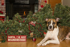 Dog Destroys Christmas Stock Image