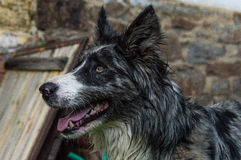 Dog. Details of the black hairy dog face Royalty Free Stock Photo