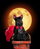 Dog in devil halloween costume sitting on chimney Royalty Free Stock Photos