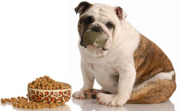 Dog on a diet Stock Photos