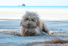 Dog dig holes in the sand Stock Photos