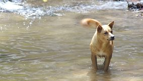 Dog dig sand under the pool stock video footage
