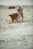 Dog digging Royalty Free Stock Image