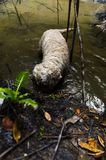 Dog digging in water Royalty Free Stock Photos