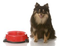 Dog dinner time Royalty Free Stock Photography