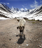 Dog on dirt road in spring mountains Stock Images