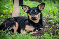 Dog dirty muzzle Stock Photo