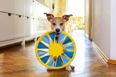 Dog disc and toy ready to play Royalty Free Stock Photography