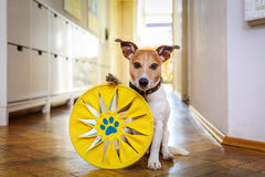 Dog disc and toy ready to play Stock Photo