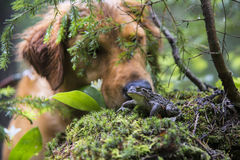 Dog discovering a toad in a forest Royalty Free Stock Images