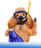 Dog diver. Royalty Free Stock Photos