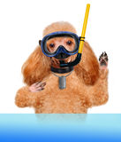 Dog diver. Stock Photos