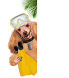 Dog diver. Stock Images