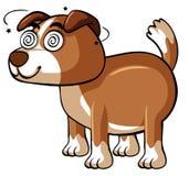 Dog with dizzy eyes Stock Photo