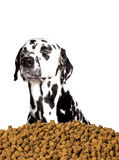 Dog do not want to eat dry food. He prefers meat and natural pro. Ducts. white background Royalty Free Stock Photography