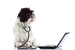 Dog doctor computer isolated on white background Stock Photos