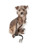 Dog Doctor With Stethoscope Royalty Free Stock Photography