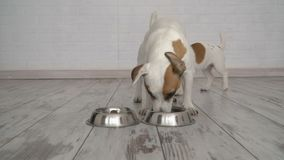 Dog does not let the puppy to the bowl stock footage