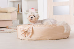 Dog on the dog bed Royalty Free Stock Images