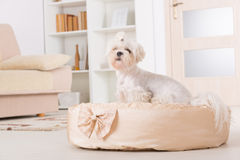 Dog on the dog bed Stock Images