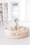 Dog on the dog bed Royalty Free Stock Image