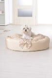 Dog on the dog bed Stock Photo