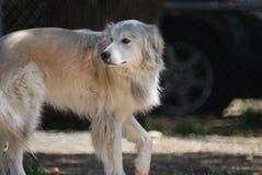 Dog, Dog Breed, Dog Breed Group, Dog Like Mammal Stock Photo