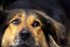Dog, Dog Breed, Dog Like Mammal, Dog Breed Group Stock Photography