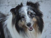 Dog, Dog Breed, Dog Like Mammal, Dog Breed Group Stock Photos