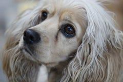 Dog, Dog Breed, Dog Like Mammal, Dog Breed Group Royalty Free Stock Photos