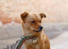 Dog, Dog Breed, Dog Like Mammal, Dog Breed Group