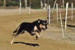 Dog, Dog Breed, Dog Like Mammal, Dog Breed Group Stock Image