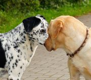 Dog, Dog Breed, Dog Like Mammal, Snout stock photo