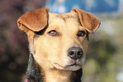 Dog, Dog Breed, Dog Like Mammal, Street Dog Royalty Free Stock Images