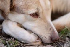 Dog, Dog Breed, Nose, Street Dog Royalty Free Stock Images