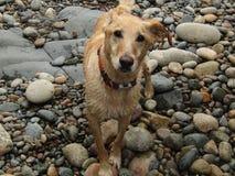 Dog, Dog Breed, Street Dog, Dog Like Mammal Royalty Free Stock Photos
