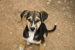 Dog, Dog Breed, Street Dog, Dog Like Mammal Royalty Free Stock Photography