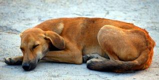 Dog, Dog Breed, Street Dog, Snout Stock Photos